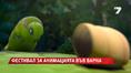 Фестивал на анимацията във Варна
